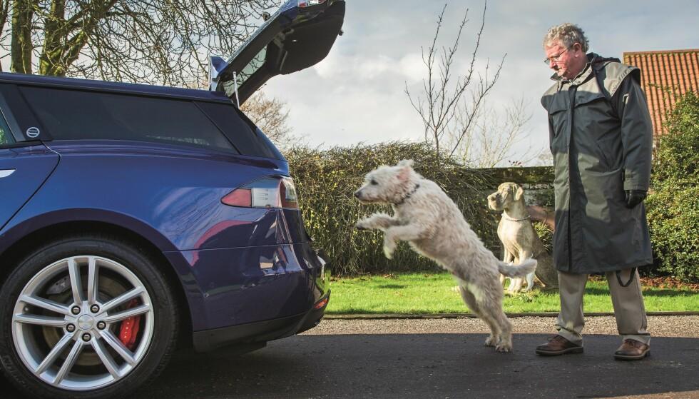 LABRADOODLE: Ted er en blanding av Labrador og puddel. Han trengte mer plass - og dermed ble Model S stasjonsvogn til. Foto: Luc Lacey