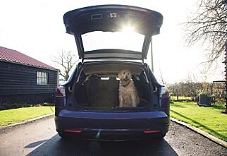 Her er Tesla-stasjonsvogna