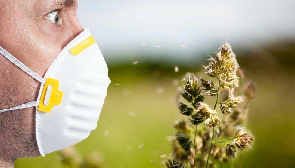 POLLENALLERGI: Start medisineringen mot pollen nå, oppfordrer Norges Astma- og Allergiforbund. Foto: Shutterstock