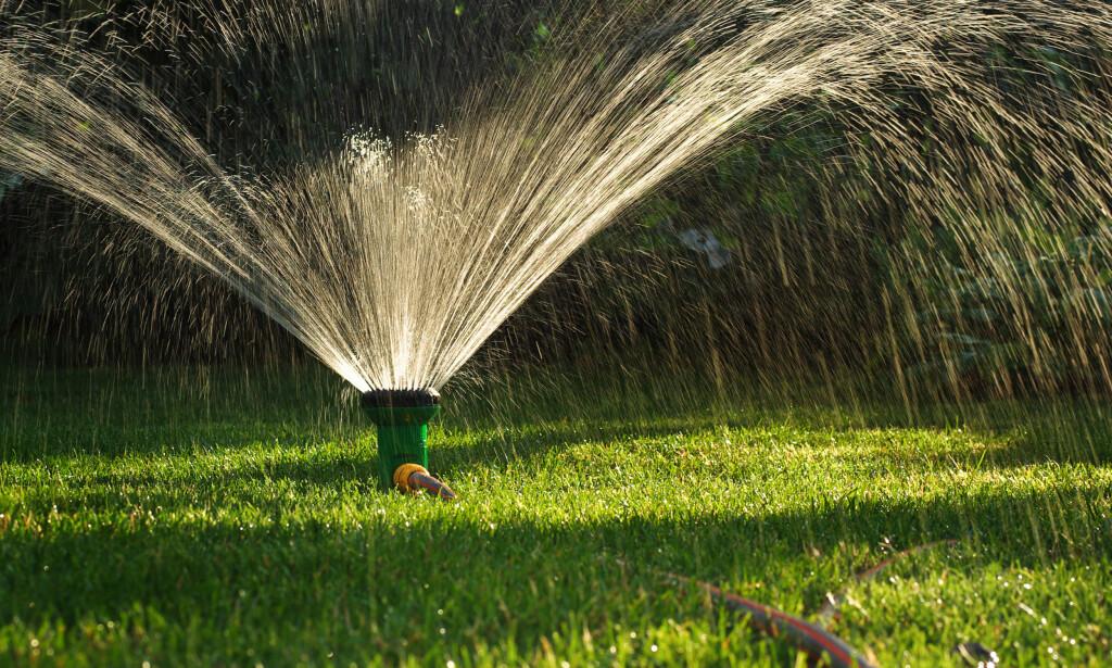 INEFFEKTIVT: Å overrisle hagen er både gammeldags og ressurskrevende. Det er bedre å vanne ved røttene, mener Hageselskapets gartner. Foto: Repina Valeriya/Shutterstock/NTB scanpix