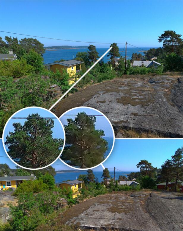 VANLIG VS. VIDVINKEL: Øverst ser du bildet tatt med det vanlige kameraet, under med vidvinkel. Kvalitetsforskjellen er godt synlig, og ekstra synlig når man ser nærmere på for eksempel dette treet. Foto: Ole Petter Baugerød Stokke