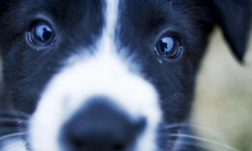 image: Felleskjøpet tilbakekaller tusenvis av sekker med kjæledyrsfôr