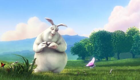 Animasjonsfilmen Big Buck Bunny kan lastes ned i 4K-oppløsning med 60 bilder per sekund. Den likte Mi Box dårlig. Foto: Pål Joakim Pollen
