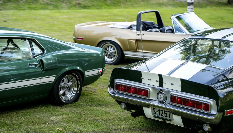 SJELDNE: Du kan gå et helt liv, uten å se en eneste original Shelby Mustang. Foto: Paal Kvamme