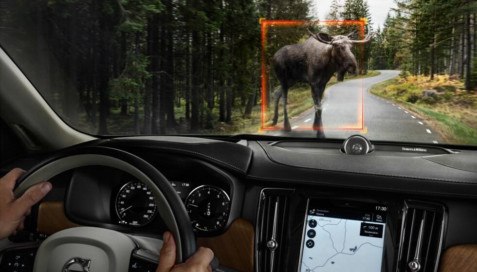 BREMSER FOR ELG: De beste nødbremssystemene, slik som hos Volvo, bremser ikke bare for bilen foran, men også for fotgjengere, syklister og store dyr. Foto: Volvo