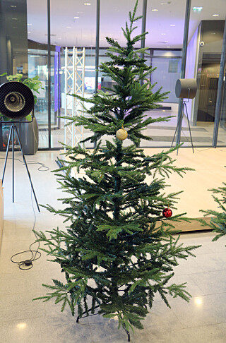 DET SKJEVE TRE PÅ HASLE: Rusta-treet ble aldri helt rett da vi monterte det. Foto: Kirsti Østvang