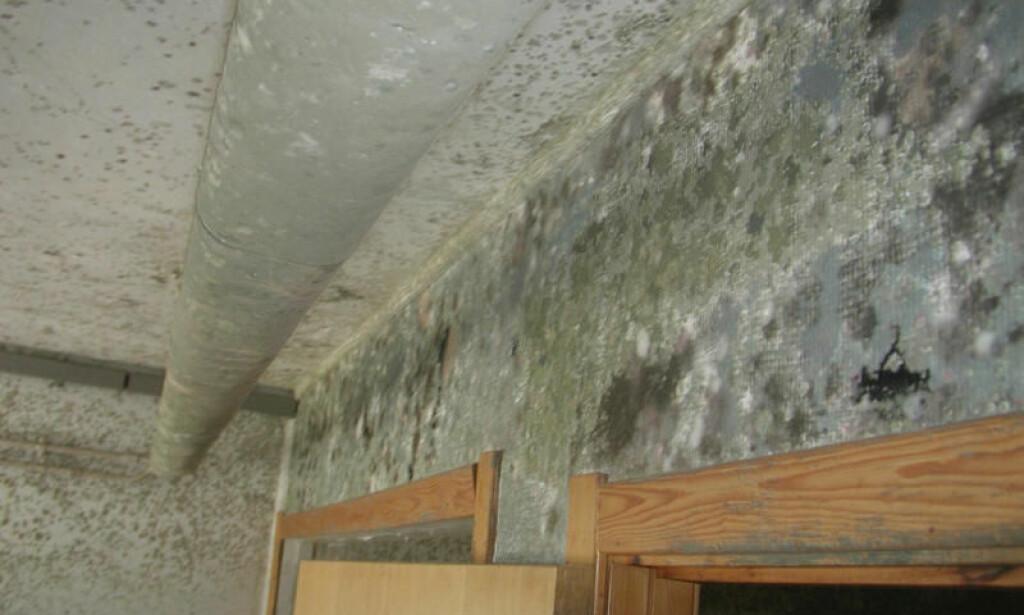 MUGG I KJELLER: Jordslag-lukt, bedre kjent som gammel kjellerlukt, er noe av det vanskelige å bli kvitt i boligen. Foto: Mycoteam.