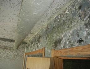 image: Kjellerlukt i huset? Det kan være dårlig nytt
