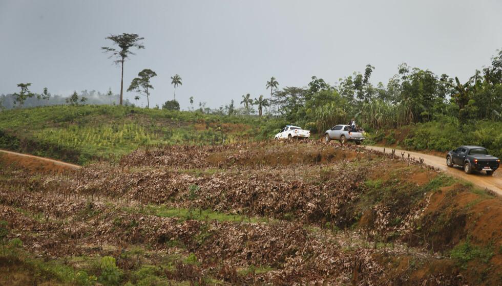 SUNN SKOGBRUK: Det er svært viktig at bankene i sine policydokumenter aktivt forplikter seg til å ikke finansiere prosjekter som rammer de opprinnelige innbyggerne i mange skogområder, altså urbefolkningene som gjennom tusenvis av år har brukt og høstet av ressursene i skogen, ifølge Etisk Bankguide. Bildet er fra regnskogen i Indonesia. Foto: Heiko Junge/NTB Scanpix.
