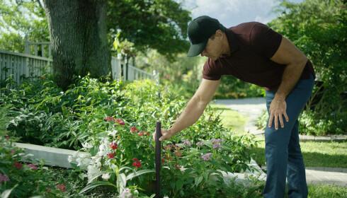 Du setter ned slike sensorer får å kartlegge hagen.