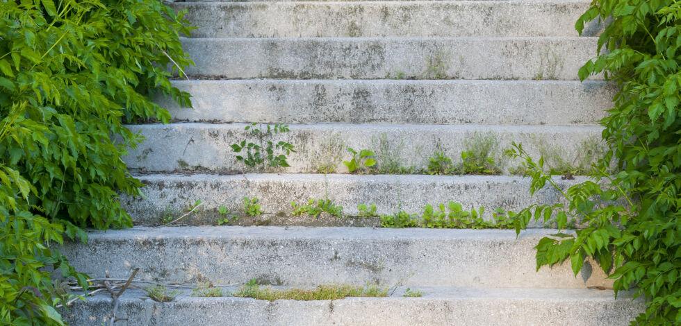image: Slik fjerner du mose fra mur