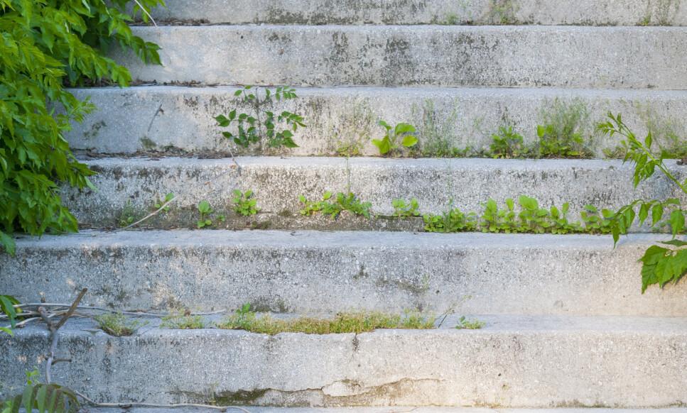 MOSE PÅ MUR: Mose og ugress trives etterhvert godt mellom glipene i muren. Det kan være trått å få bort, men ikke umulig. Tipsene får du i artikkelen under. Foto: NTB Scanpix.