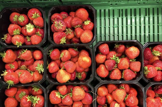 GÅR UNNA: Flere butikker som selger jordbær får inn små partier som fort blir utsolgt, noe som ikke er uvanlig tidlig i sesongen for norske jordbær. Foto: Torstein Bøe/NTB Scanpix.