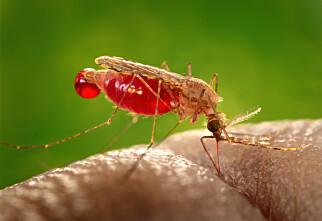 Dette holder myggen unna