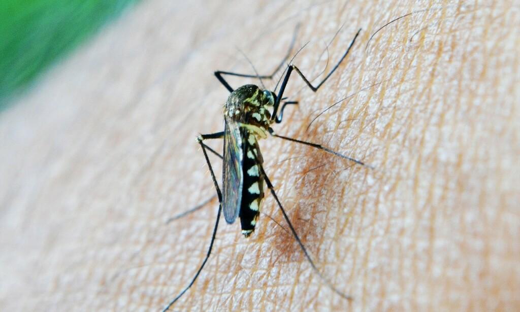 MALARIA: Kan bli et potensielt folkehelseproblem dersom temperaturen stiger. Foto Mohamed Nuzrath / Pixabay