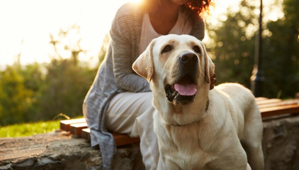 UNNGÅ ANDRE HUNDER: Unngå parker der det daglig luftes mange andre hunder - og velg heller egen hage eller skogen. råder ekspertene. Det er ennå ikke klart hva sykdommen skyldes, som har kostet et 20-talls hunder livet. Foto: Shutterstock/NTB scanpix