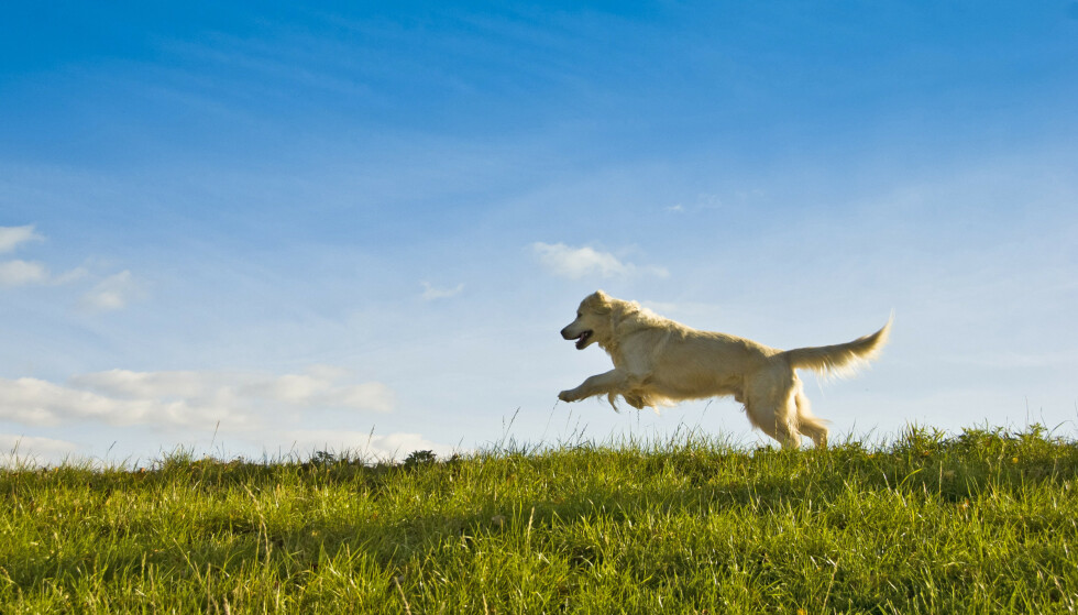 IKKE BÅNDTVANG? Du skal likevel ha kontroll på hunden din. Foto: NTB Scanpix