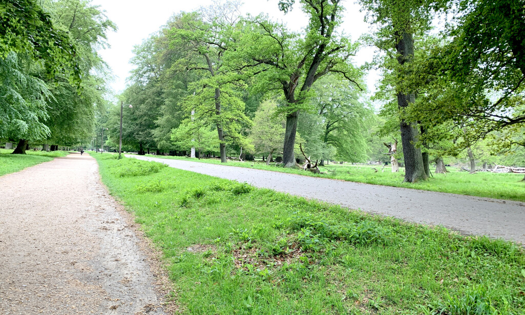 PÅ VEIEN: På vei fra togstasjonen til Bakken må du gjennom en skog. Spaserturen tar 10 minutter. Foto: Kristin Sørdal