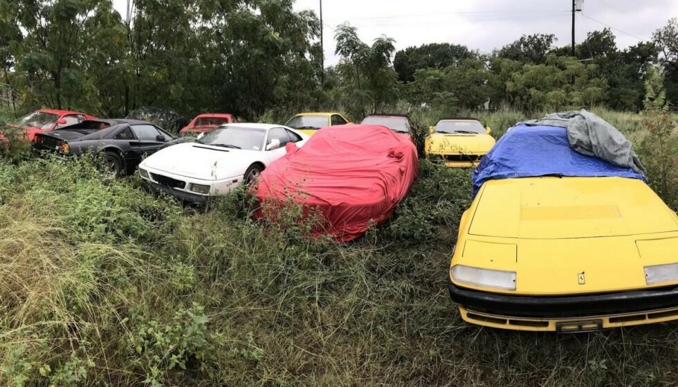 TRIST SYN: På et jorde i Texas sto denne samlingen med biler fra Ferrari og ble ødelagt. Det var et trist syn for Ferrari-entusiast Paul Cox som fikk i oppdrag å forsøke å få bilene på veien igjen. Foto: Paul Cox/Silodrome