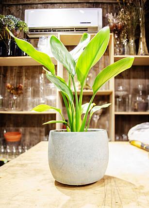 TRENGER MYE LYS: Mange planter er avhengig av dagslys. Foto: Runa Leiran