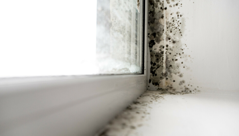 DÅRLIG TEGN: Kondens på vinduene og muggvekst er ikke godt nytt for boligen din. Foto: Shutterstock/NTB Scanpix.
