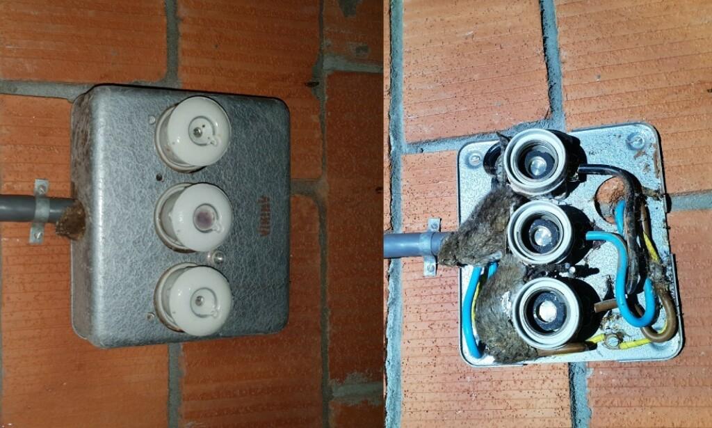 DEN SATT I SIKRINGSBOKSEN: Åpningen rundt kabelen som går inn i denne lille sikringsboksen, var stor nok til at to mus kom seg inn - og forårsaket kortslutning. Foto: Elsikkerhet Norge