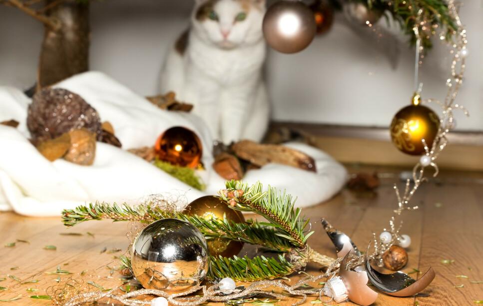 OI, DA: Det er nok ikke kattens intensjon å ødelegge husvertens julepynt - det er rett og slett kattens naturlige instinkt som styrer lekelysten. Foto: NTB Scanpix.
