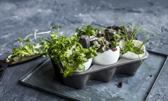 PLANTER I EGGESKALLET: Eggeskall kan blant annet brukes til å plante urter eller andre småblomster i. Foto: Sara Johannesen.