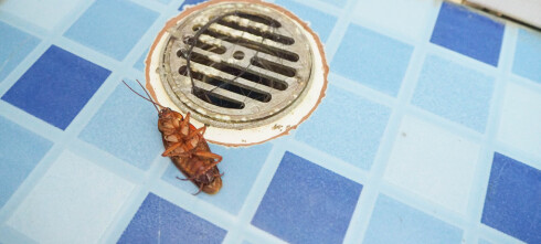 Insekter, kakerlakker, maur og «mulig blod» på Syden-hotellet