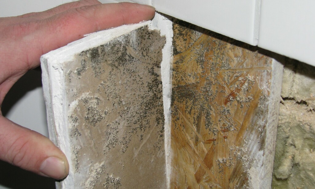 NY VEGG: Denne baderomsveggen er ny, men likevel har det dukket opp muggsopp som følge av fuktskader. Foto: Mycoteam.