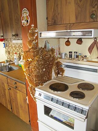 MARERITT: Bildet viser ekte hussopp på kjøkkenet i en enebolig. Foto: Mycoteam.