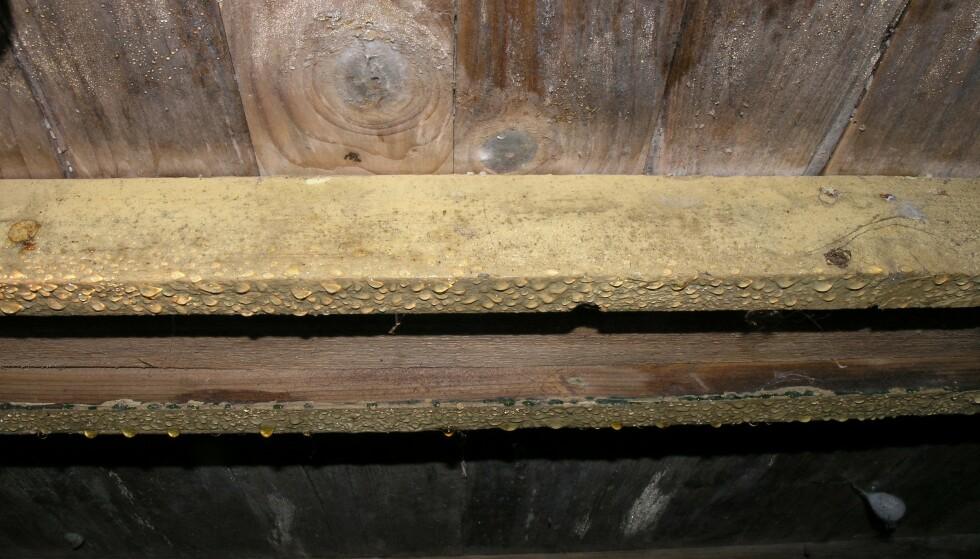 SOMMERKONDENS: Her har det oppstått kondens i krypkjeller på sommerstid. Foto: Mycoteam.