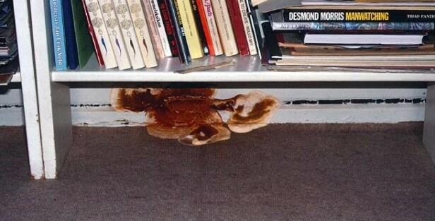LOFTSLEILIGHET: Under bokhylla i denne loftsleiligheten har det oppstått muggsopp. Foto: Mycoteam.