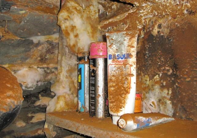 I KJELLEREN: Her har det kommet ekte hussopp i lagringshyller i en kjeller. Foto: Mycoteam.