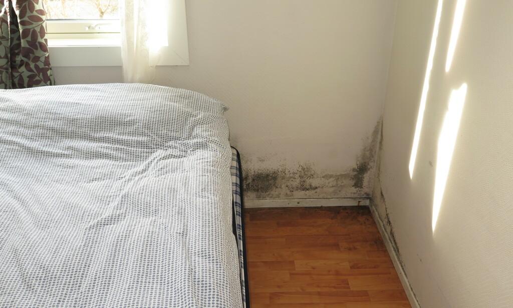 BAK SENGEN: Det sorte på veggen er fukt og muggsopp bak sengen. Foto: Mycoteam.
