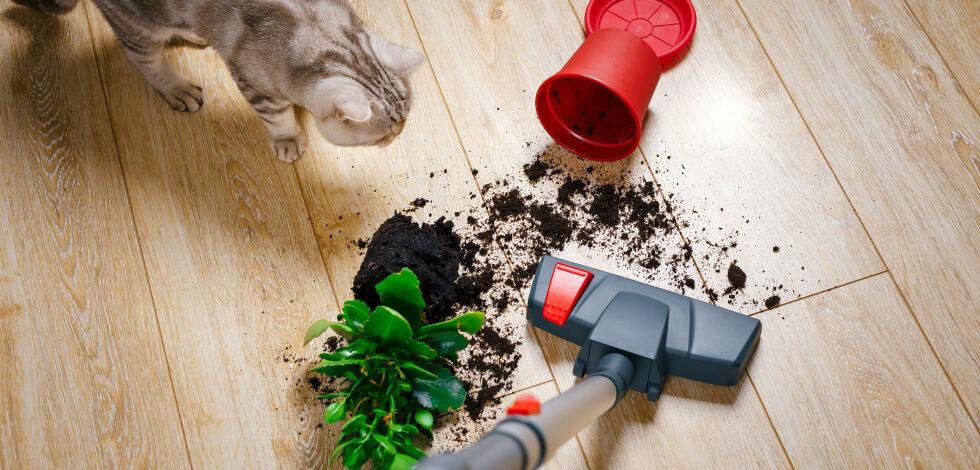 image: Dette ødelegger støvsugeren