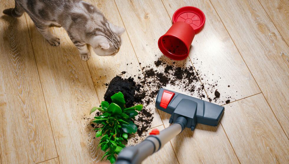 <strong>ØDELEGGENDE:</strong> Det er slett ikke alt av rusk og rask på gulvet som bør støvsuges opp. Foto: NTB Scanpix.