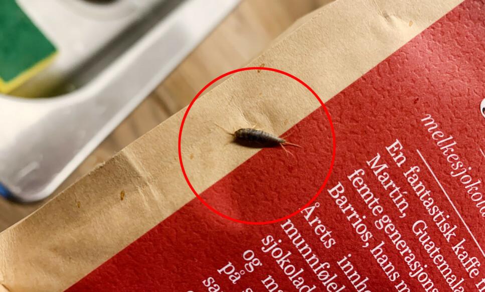 FULGTE MED HJEM: Da kaffen skulle pakkes ut av bæreposen, oppdaget vi en liten krabat som hadde fulgt med fra butikken. Foto: Bjørn Eirik Loftås