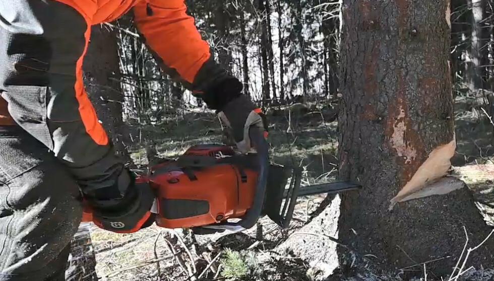 BRYTEKANT: Brytekanten er helt avgjørende for å få kontroll på fellinga. Foto: Rune M. Nesheim