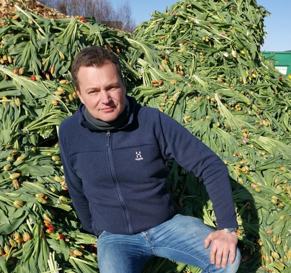 FORTVILER: Tulipanprodusentene i Norge fortviler over å måtte kaste mange hundre tusen tulipaner denne uka. Sebastian Schouten, daglig leder i gartneriet Matthe Schouten AS i Lier, er spent på hva som skjer mot påske, når de skal ut med mange millioner tulipaner - i det som normalt sett er en av de store høysesongene for tulipansalg her til lands. Salget svikter fordi folk ikke er ute og handler. Foto: Tonje Bergh