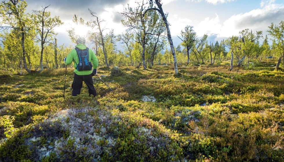 TIL FJELLS: Femundsmarka er ett av mange mulige reisemål i sommer, om du vil litt utenom de mest populære, norske reisemålene. Foto: NTB Scanpix