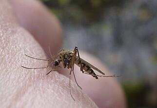 Hvilke myggmidler fungerer?
