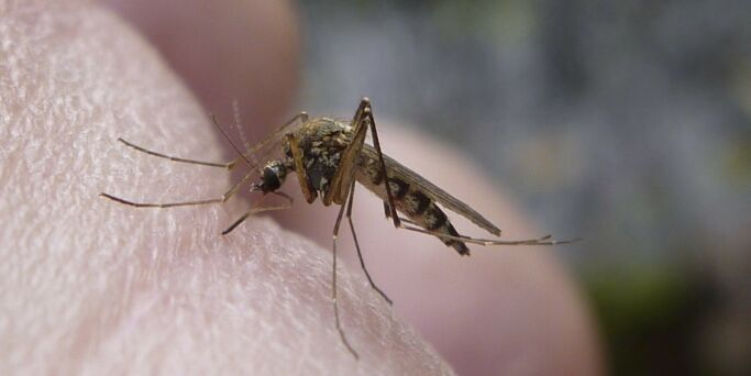 image: Hvilke myggmidler fungerer?