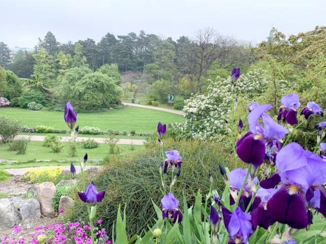 BESTE PUSTEROM I KØBENHAVN: Botanisk Have er stemt frem som et av de beste pusterommene av københavns innbyggere. Her kan du rusle rundt og kjenne roen senke seg - og kanskje ta lunsjen på en benk. Foto: Kristin Sørdal