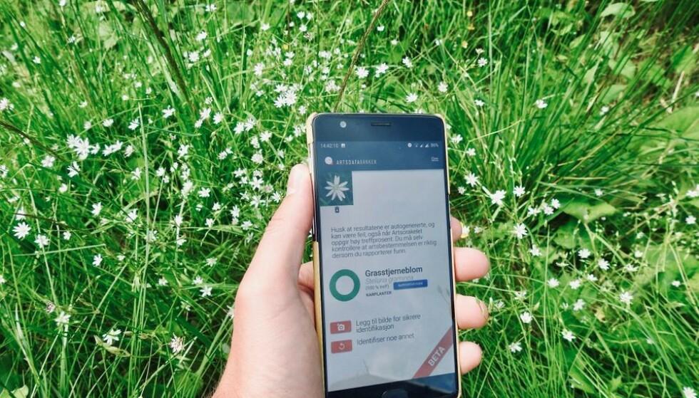 ARTSORAKELET: Lurer du på hvilken blomst det er? Da kan denne nettappen være nyttig. Foto: Wouter Koch