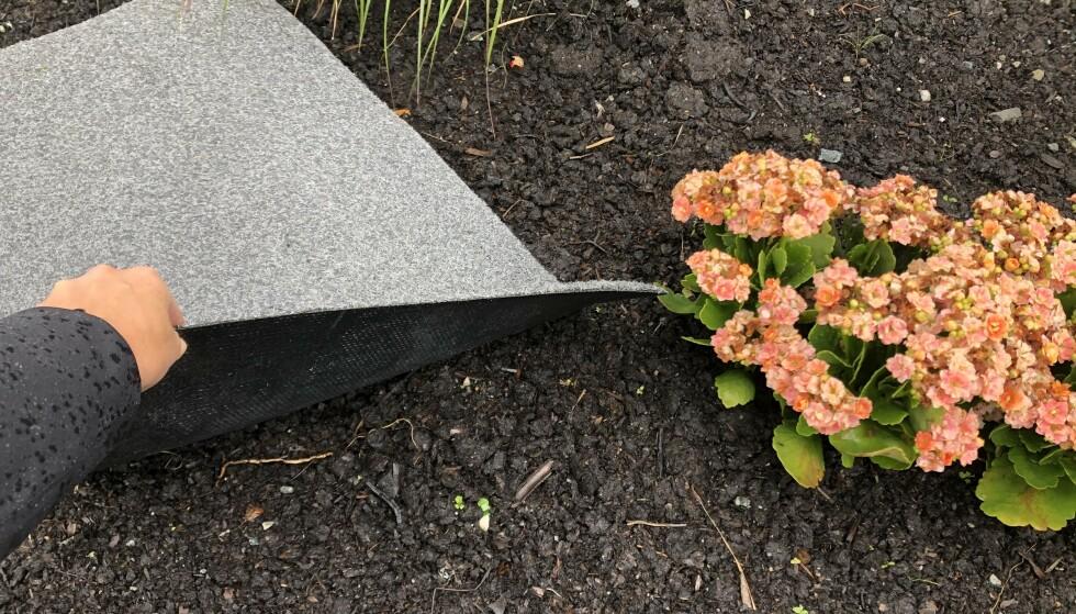 FELLE: En dørmatte i hagen kan beskytte plantene dine mot mordersneglene. I artikkelen under får du vite hvorfor! Foto: Linn Merete Rognø.