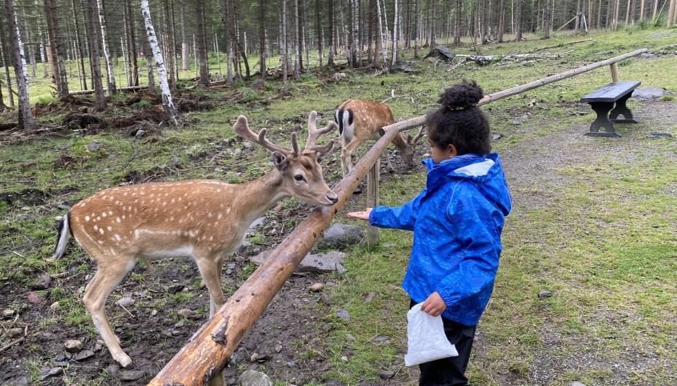 <strong>Gøy med dyr:</strong> Barnas Gård ved Hunderfossen i Lillehammer er en av flere steder hvor barn kan møte dyr. Foto: Odd Roar Lange