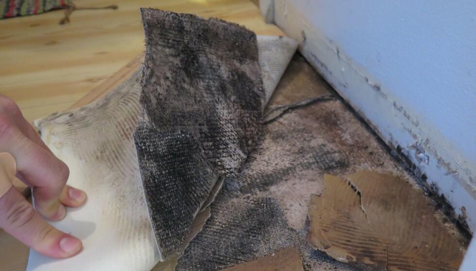 FÆL LUKT: Under gamle gulvbelegg kan det være mye  ekkelt! Muggsopp, bakterier og fuktige limrester kan gi  vond lukt og dårlig inneklima. Foto: Mycoteam.