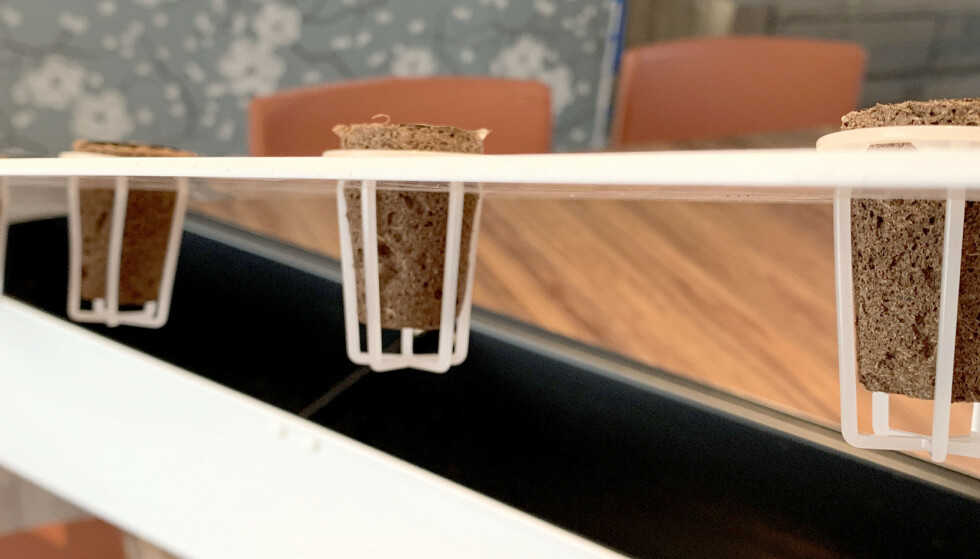PLUGG DEN INN: Startsetter består av holdere og planteplugger som du setter ned i lokket - som du så plasserer på toppen av en blomsterkasse med vann. Så er det bare å vente til der begynner å gro. Foto: Kristin Sørdal