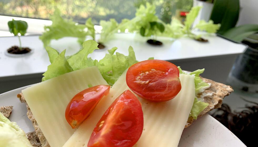 GENIALT ENKELT: Frisk opp hjemmelunsjen med hjemmegrodd salat og urter. Med «Harvy» får selv vi grønne fingre - og det er superenkelt og krever minimalt med arbeid. Foto: Kristin Sørdal